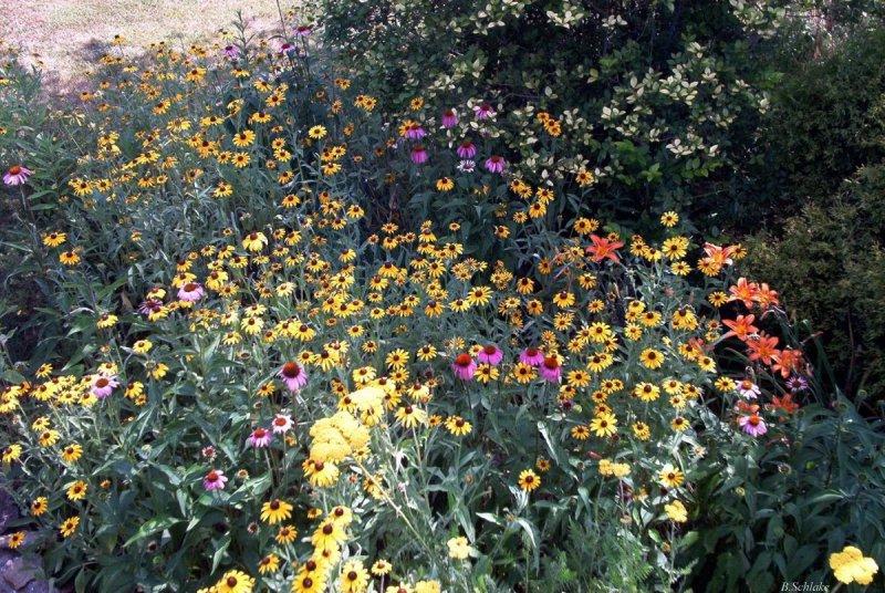 Garden Design Garden Design With Autumn Wildflower Gardening - Wild flower garden