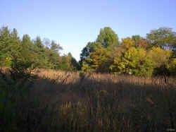 This part of Rowe woods is the prairie grass lands that is on the eastern end of the nature preserve. There is a nice Blue Bird house in the middle of the grass land.
